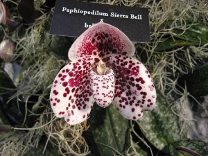 Paph-example